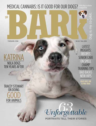 Best Price for The Bark Magazine Subscription