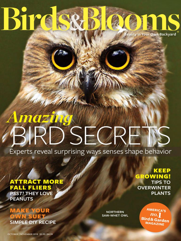 Birds & Blooms Magazine - DiscountMags.com