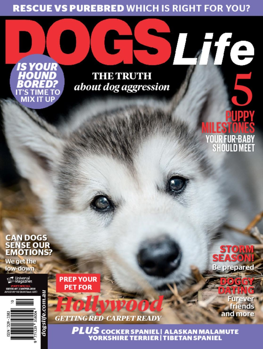 Dog Food Subscription Free Shipping