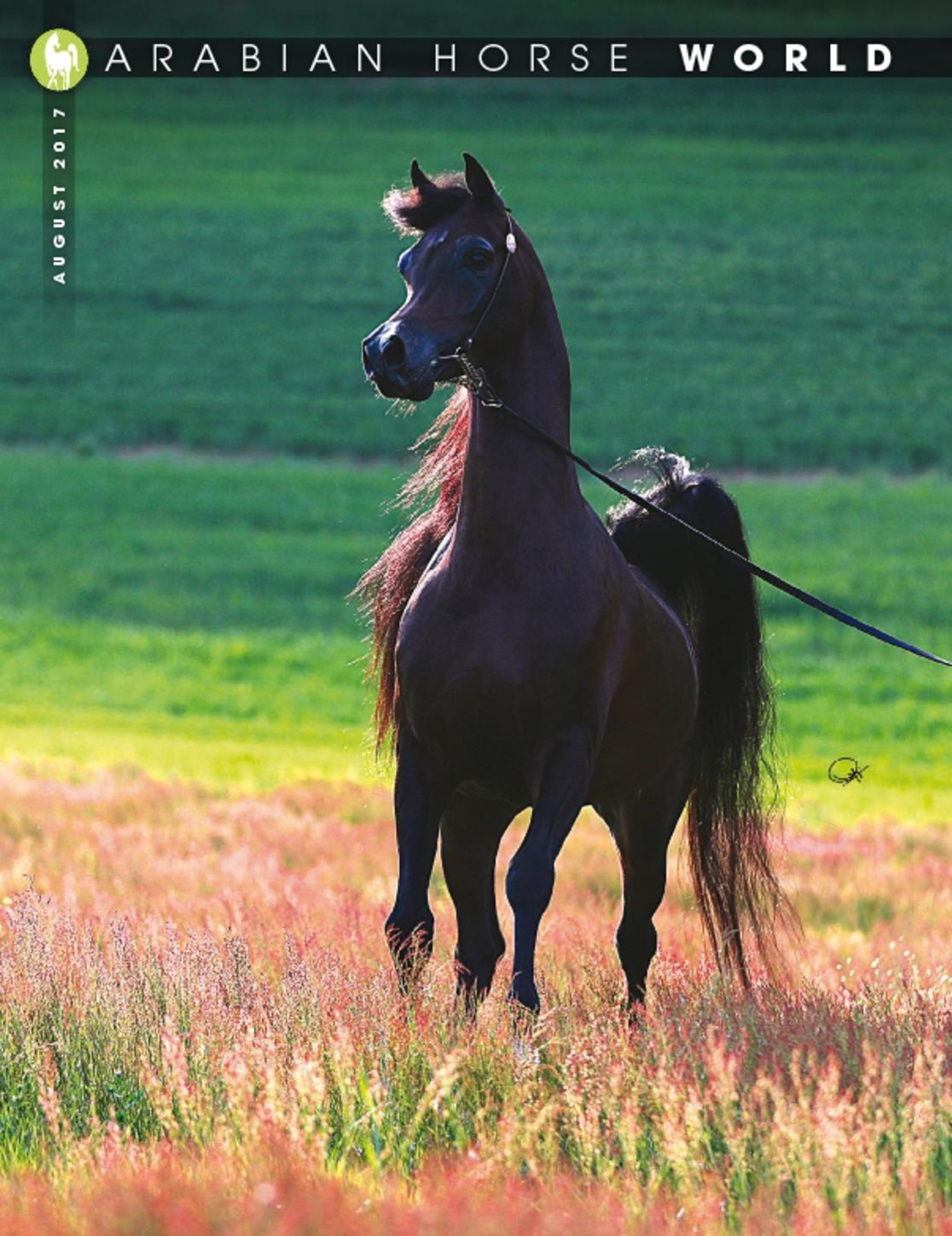 Arabian Horse World - January 1965 - Vol. 5,No. 4-Stallion Guide 1st SquareBound