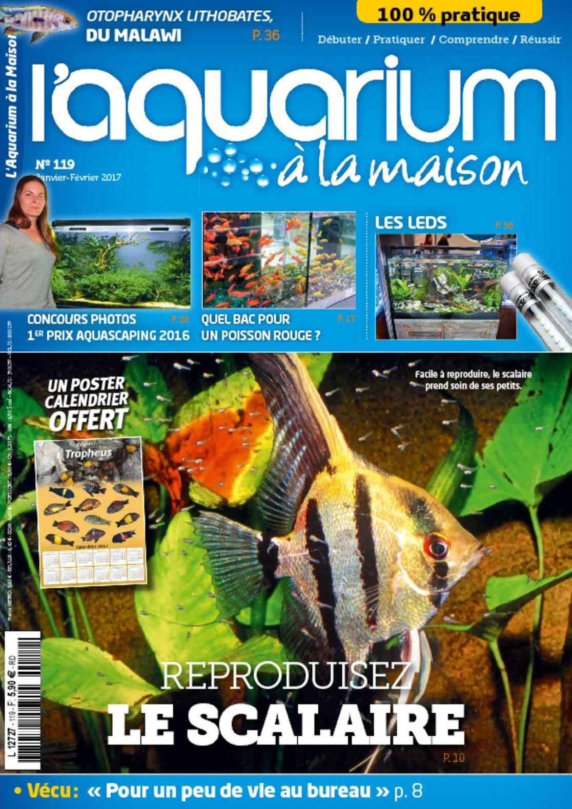 Aquarium a la maison digital magazine for Aquarium a la maison pdf