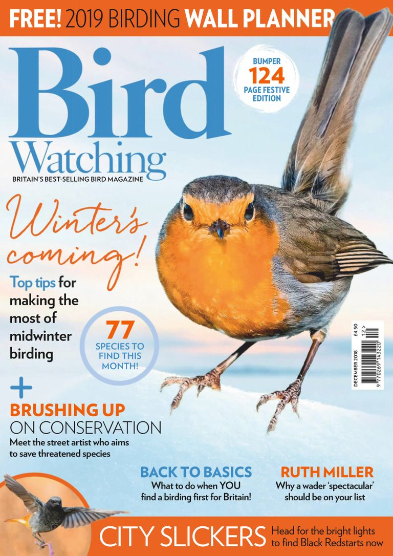 Bird Watching Digital