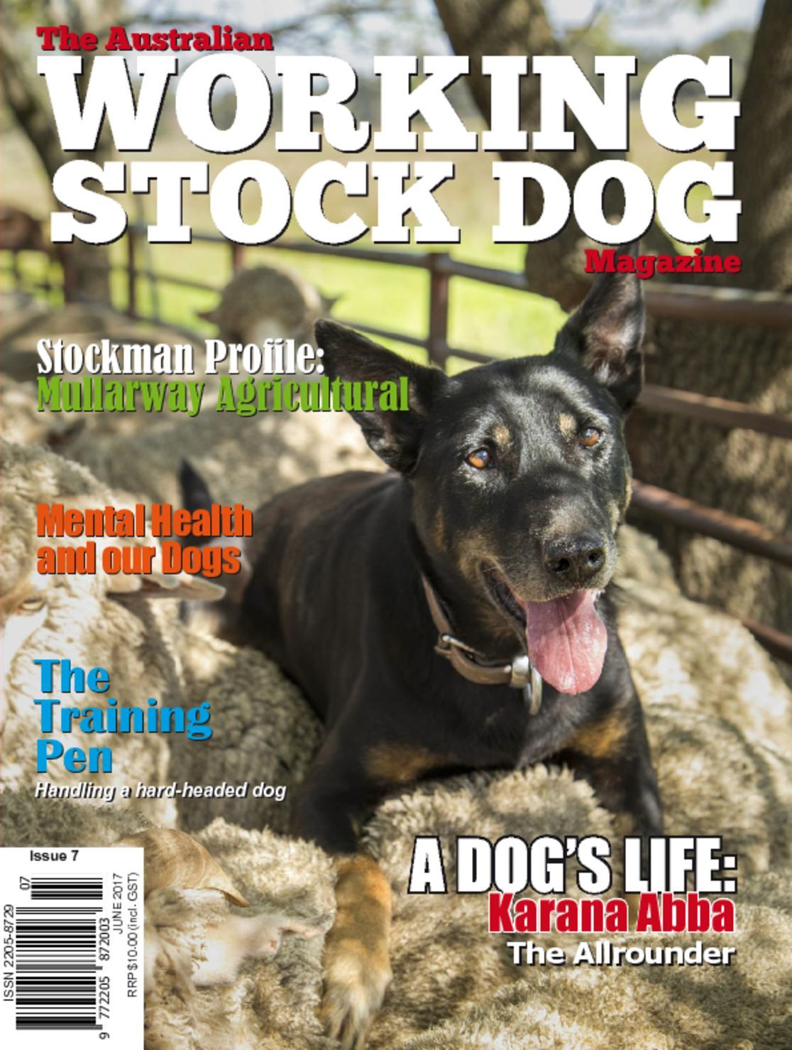 Australian Working Stock Dog Digital